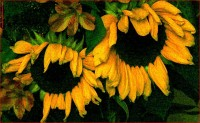 http://allenlieberman.com/files/gimgs/th-6_SUNFLOWERS-web_v3.jpg